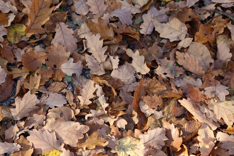 Tapijt van de herfstbladeren De gevallen herfst gaat ter plaatse weg royalty-vrije stock afbeelding