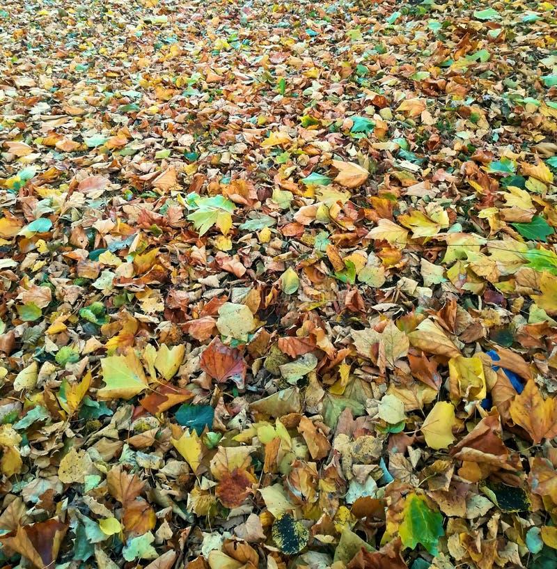 Tapijt van groene en oranje bladeren royalty-vrije stock afbeeldingen