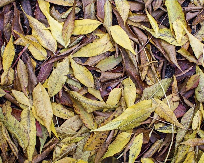 Tapijt van rode bladeren in de herfst royalty-vrije stock foto's