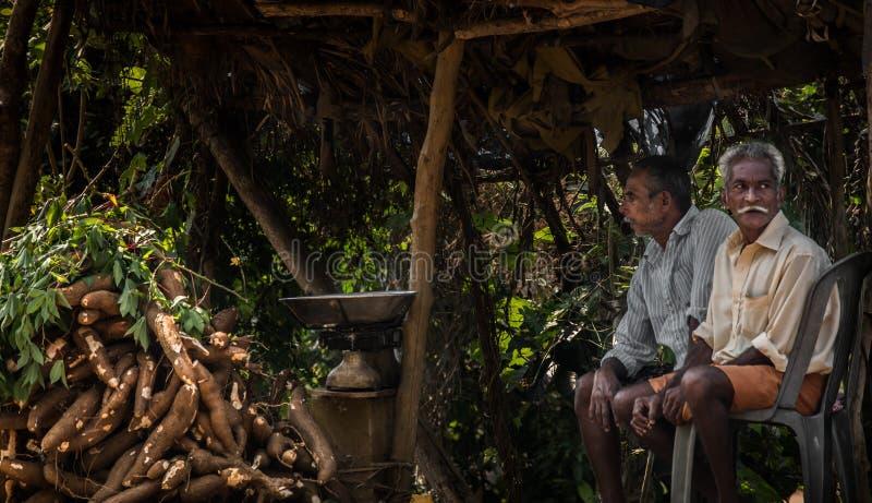 Tapioki zbiera w Kerala obraz royalty free