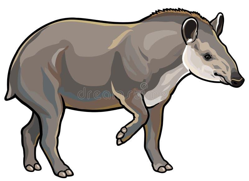 Tapiro della pianura illustrazione di stock