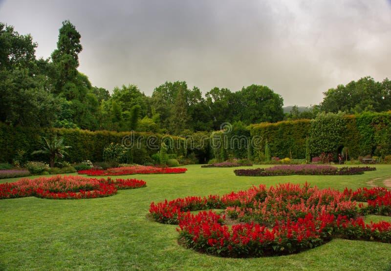 Tapis d'herbe verte souillé avec les fleurs rouges image libre de droits
