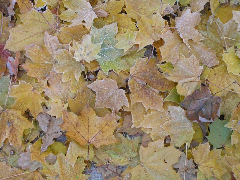 Tapis de feuillage de jaune d'automne photographie stock