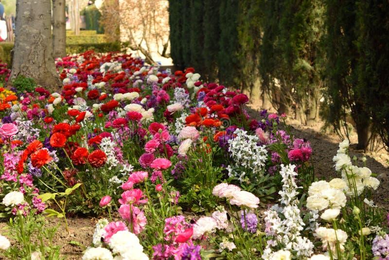 Tapis des fleurs encadrées par des arbres image stock
