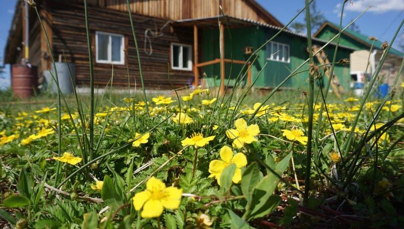 Tapis des fleurs jaune photographie stock libre de droits