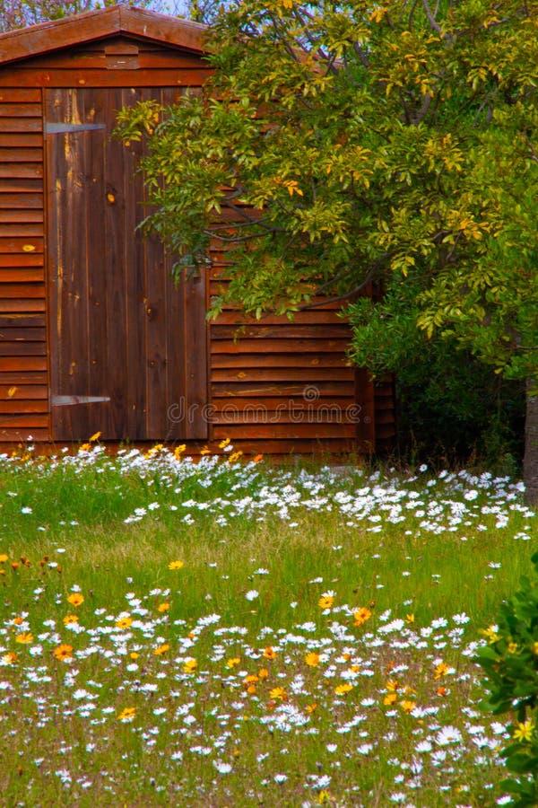 Tapis des marguerites blanches heureuses et des renoncules et des gazanieas jaunes de soleil photo stock