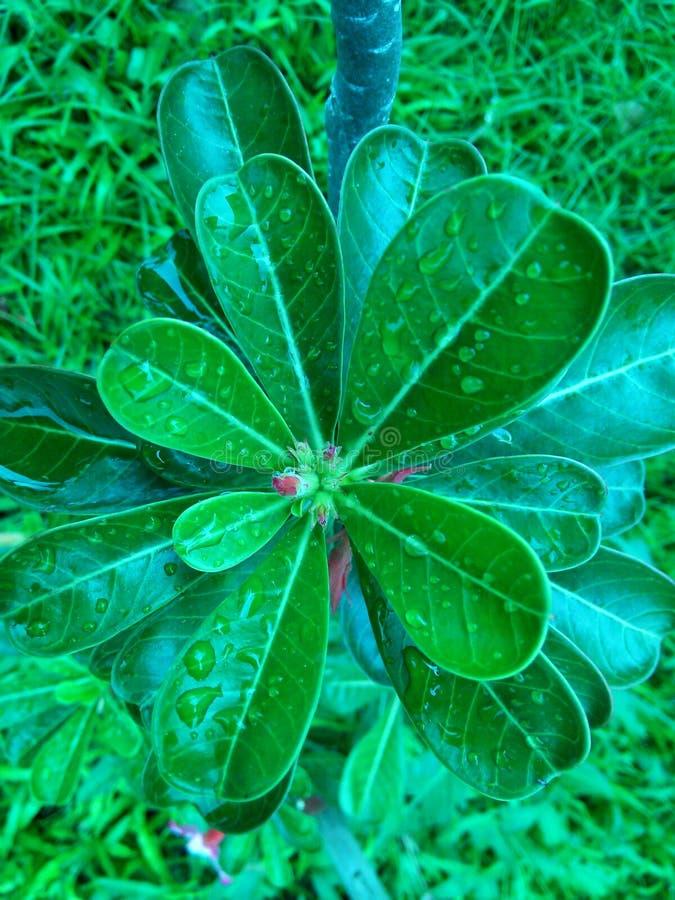 Tappa på leafen arkivbilder