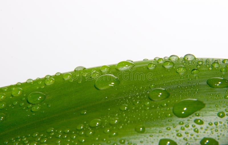 Download Tappar makro arkivfoto. Bild av raindrops, revor, textur - 285038