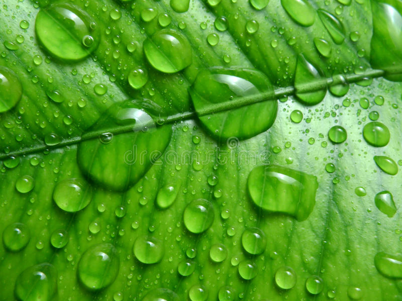 tappar nytt grönt leavemakrovatten arkivfoton