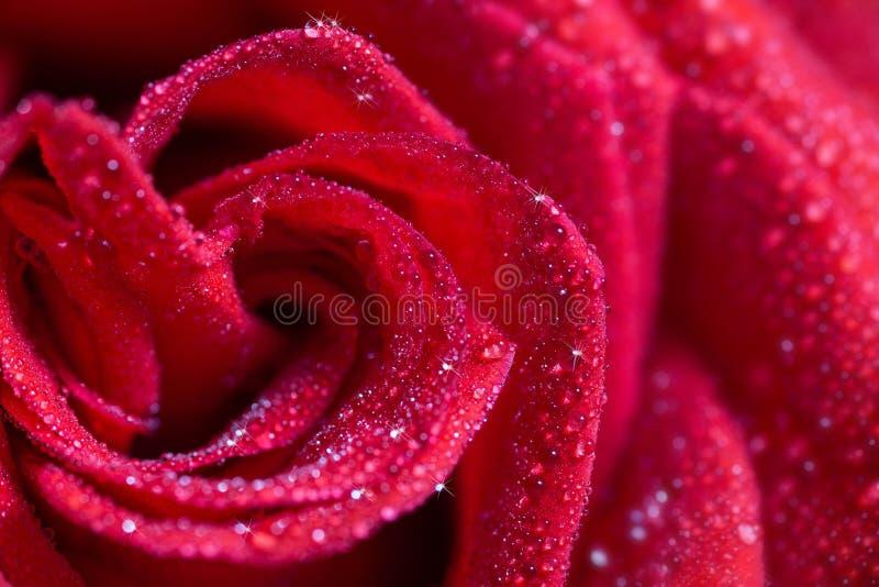 tappar rött rose vatten royaltyfria foton