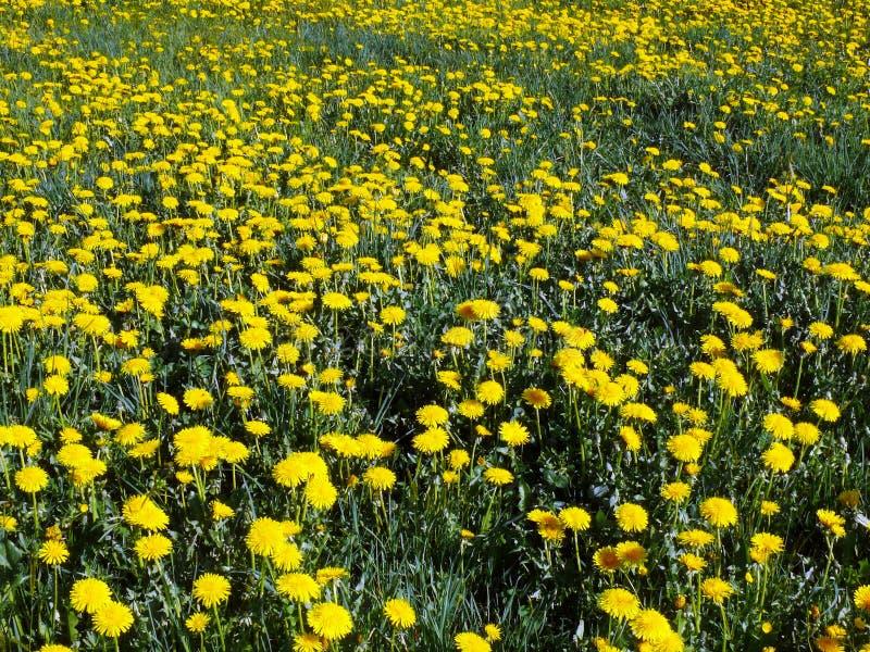 Tappeto del fiore fotografia stock