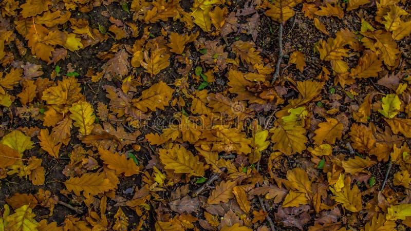 Tappeto delle foglie immagini stock