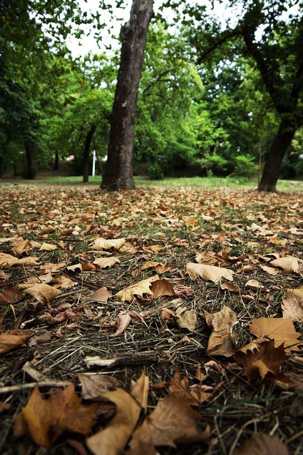 Tappeto delle foglie fotografia stock libera da diritti