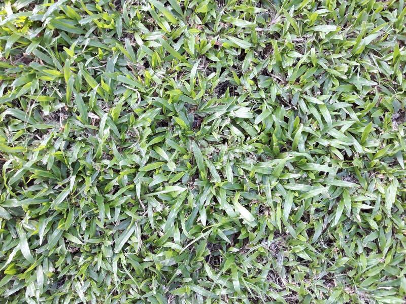 Tappeto erboso dell'erba verde in giardino, fondo naturale di eco fotografie stock libere da diritti