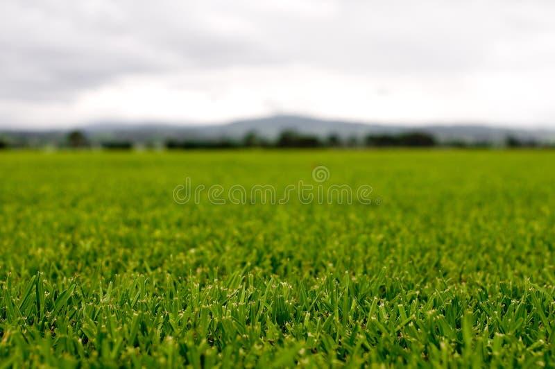 Tappeto erboso verde immagini stock libere da diritti