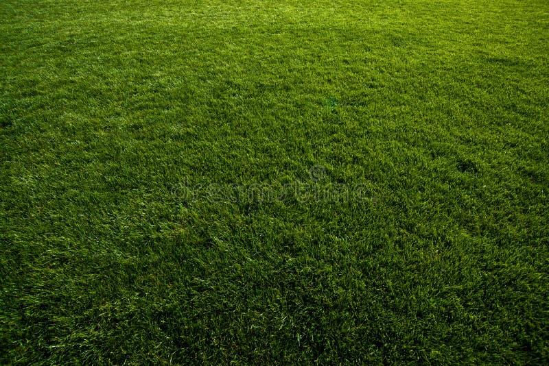 Tappeto erboso verde al campo di calcio immagini stock libere da diritti