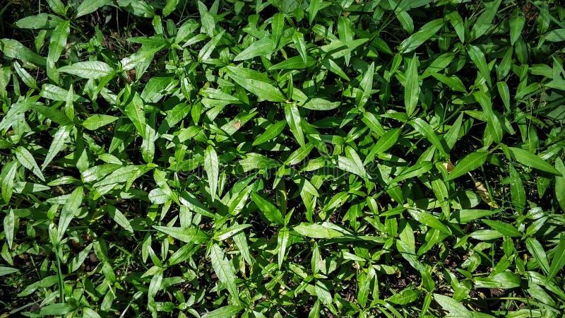 Tappeto verde della foresta di piccola macro del primo piano delle piante, struttura, fondo fotografie stock libere da diritti
