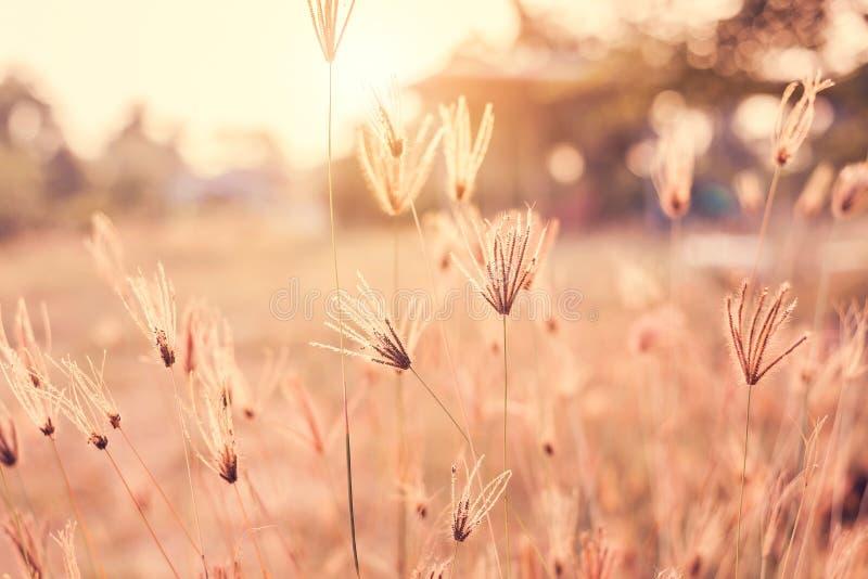 Tappning av den härliga blomman har den mjuka fokusen på solnedgångbakgrund arkivfoto