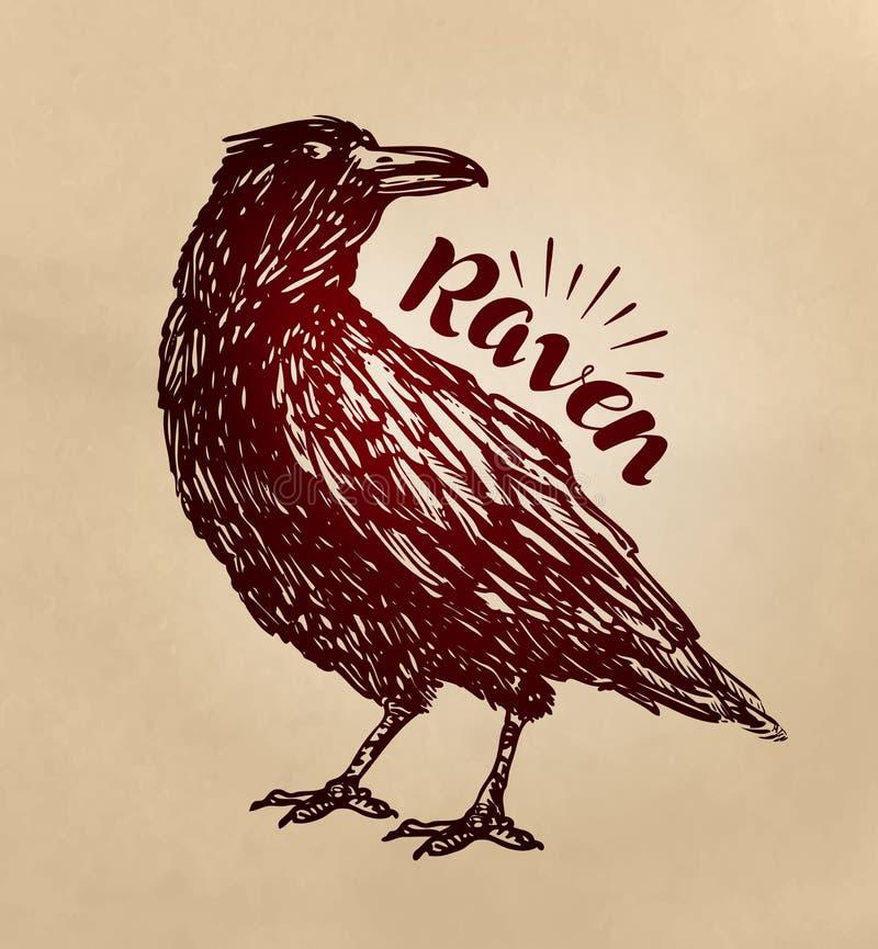 Tappning dragit korpsvart Galandet fågel skissar också vektor för coreldrawillustration stock illustrationer