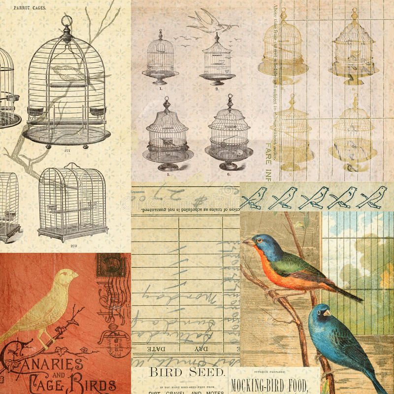 tappning för montage för collage för bakgrundsfågelburar arkivbild