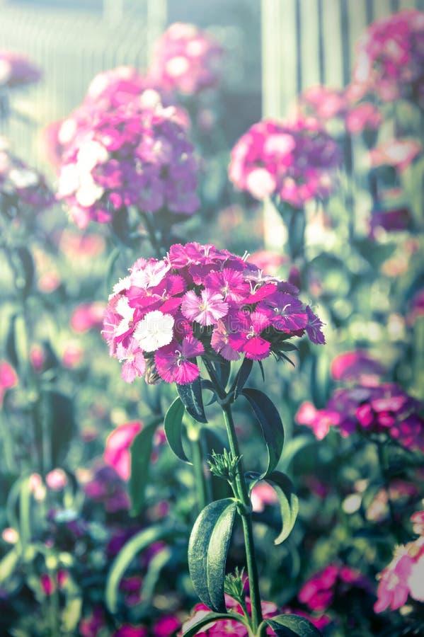 Tappning filtrerade lilablommor arkivbild