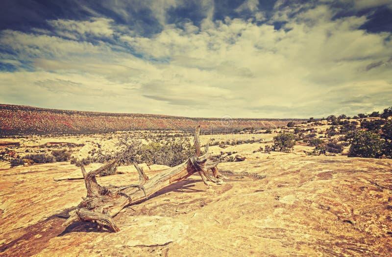 Tappning tonad bild av det lösa landskapet arkivbilder