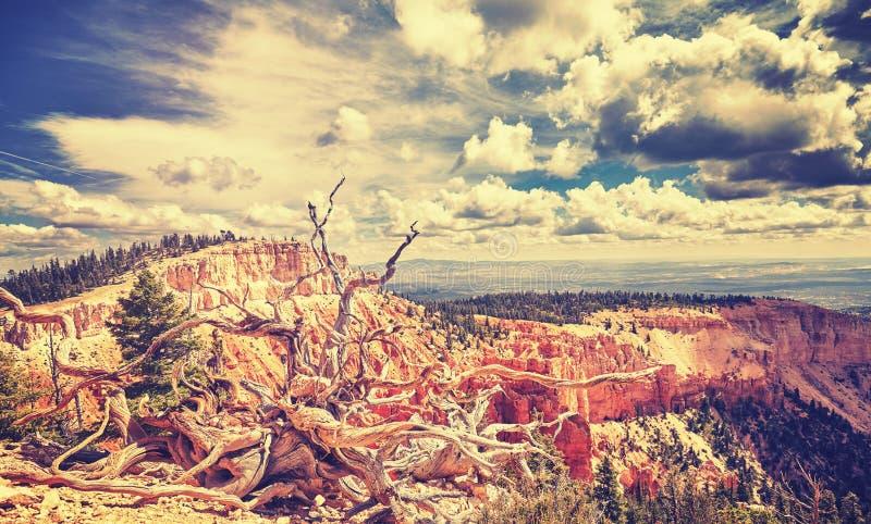 Tappning tonat löst landskap, USA royaltyfri foto