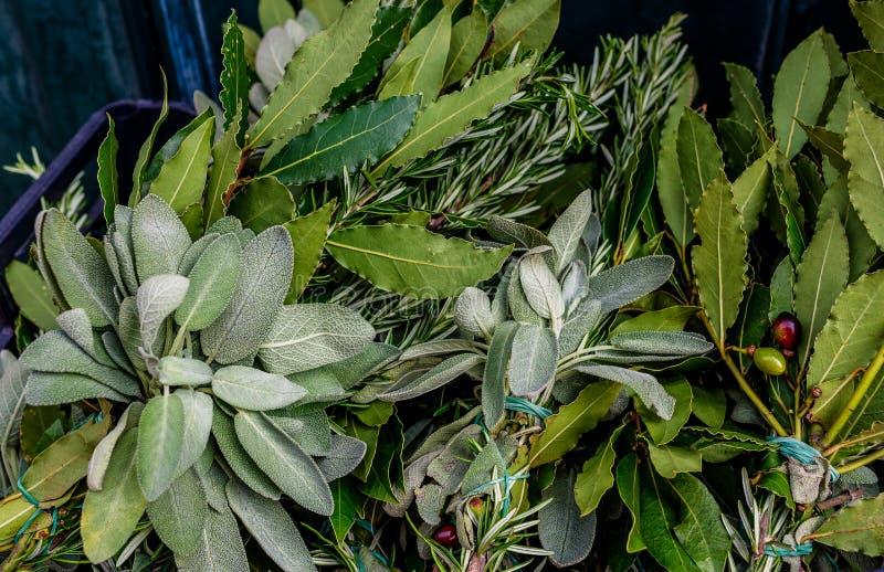 Tappningbakgrund av nya gröna sidor av olika kryddor Rosmarin lagerblad, oliv, olivgröna filialer, basilika i en ask på Riaen fotografering för bildbyråer