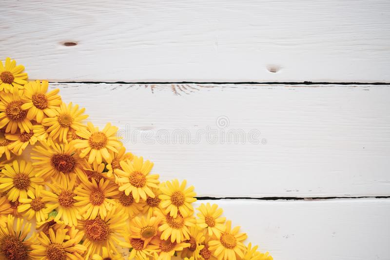 Tappningbakgrund för vitt bräde med gula blommor royaltyfri fotografi