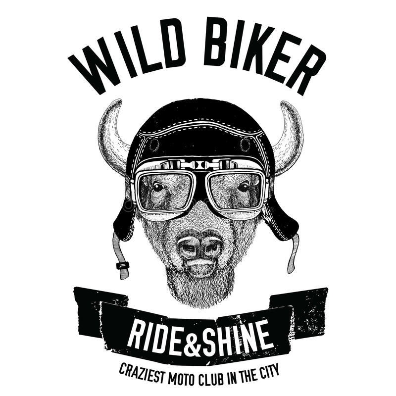 Tappningbilder av buffeln, bison, oxe för denskjorta designen för motorcykeln, cykel, moped, sparkcykelklubba, aero klubba royaltyfri illustrationer