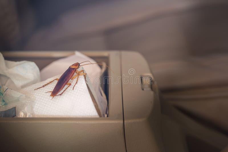 Tappningbilder av kackerlackor inom bilen royaltyfri bild