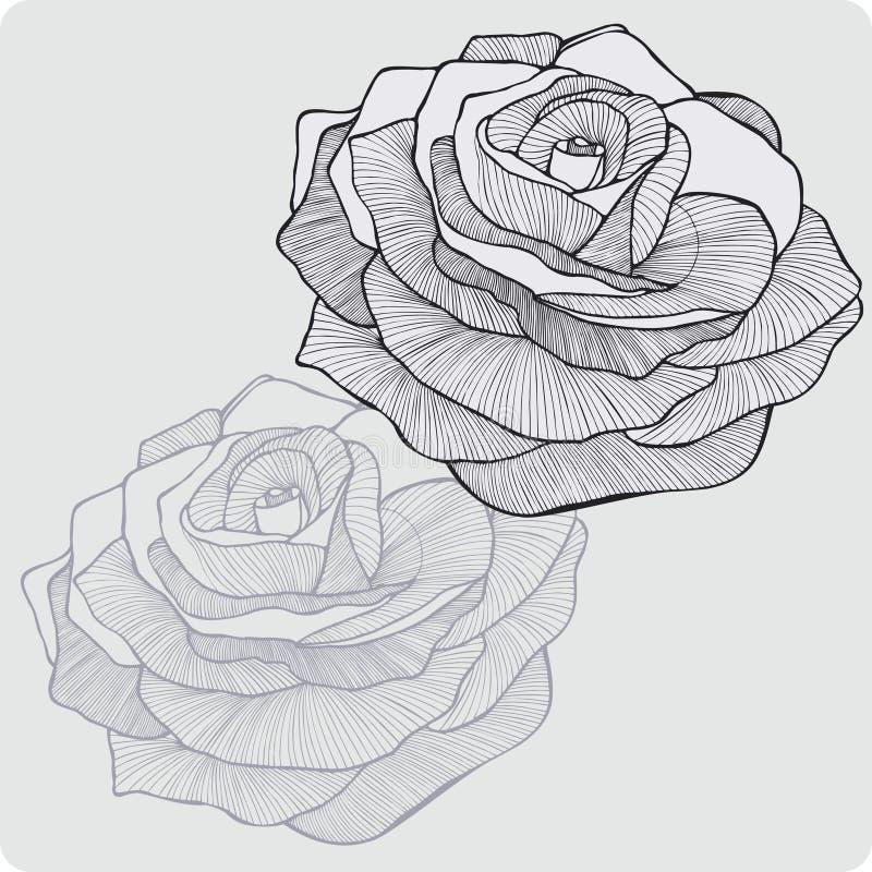Tappningblomman steg, hand-teckningen också vektor för coreldrawillustration royaltyfri illustrationer