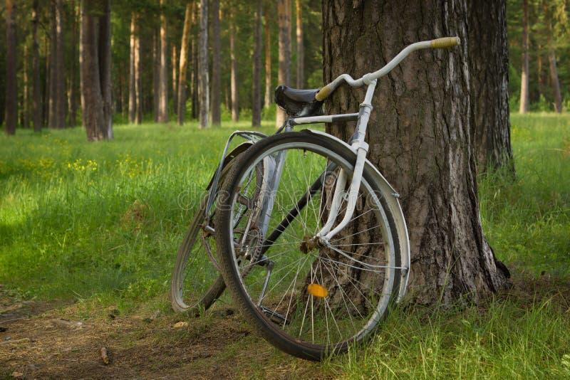 Tappningcykel i skogen royaltyfri fotografi