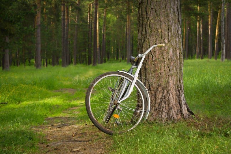 Tappningcykel i skogen arkivbilder