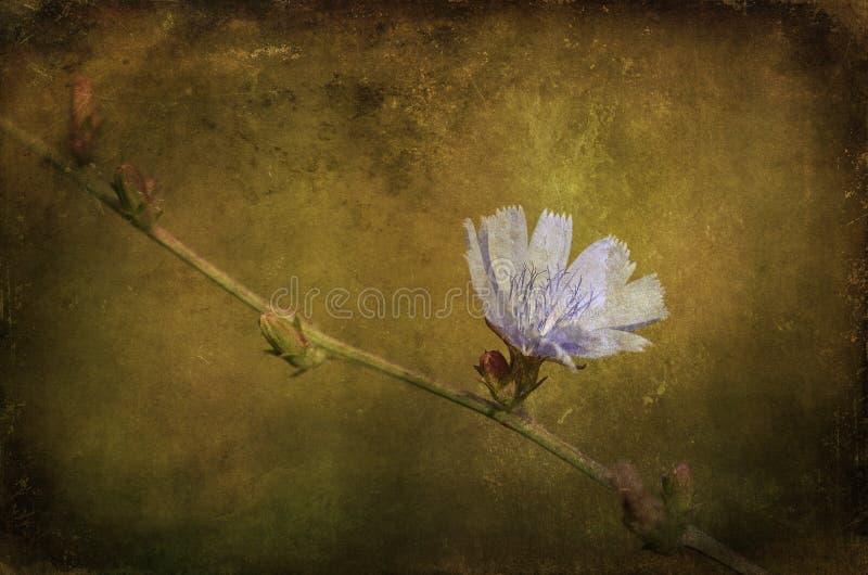 Tappningfoto av en blå vildblomma arkivbild