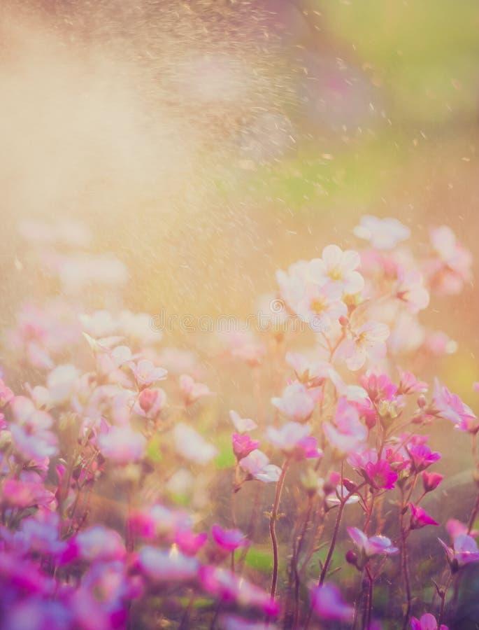 Tappningfoto av härliga små blommor Användbart som bakgrund royaltyfria foton