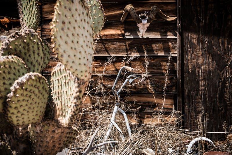 Tappningfoto av kaktus- och djurskelettet i SELIGMAN, ARIZONA/USA royaltyfri bild