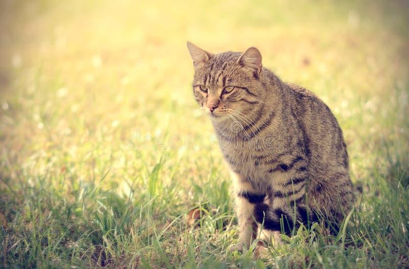 Tappningfoto av katten arkivfoton