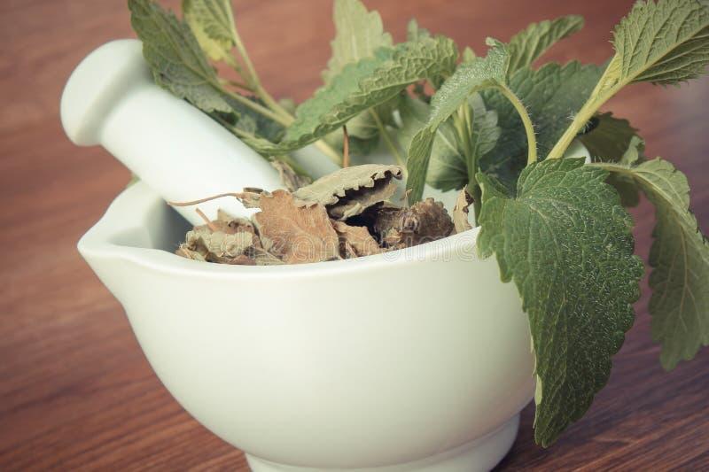 Tappningfoto, ny gräsplan och torkad citronbalsam i mortel, herbalism, alternativ medicin arkivbild