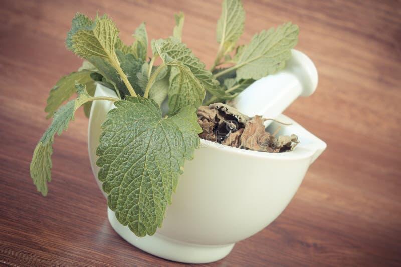 Tappningfoto, ny gräsplan och torkad citronbalsam i mortel, herbalism, alternativ medicin royaltyfri fotografi