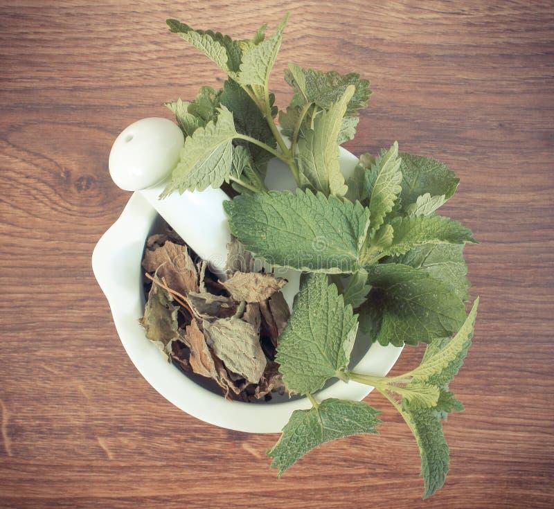 Tappningfoto, ny gräsplan och torkad citronbalsam i mortel, herbalism, alternativ medicin royaltyfri bild