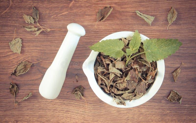 Tappningfoto, ny gräsplan och torkad citronbalsam med mortel, herbalism, alternativ medicin royaltyfri fotografi