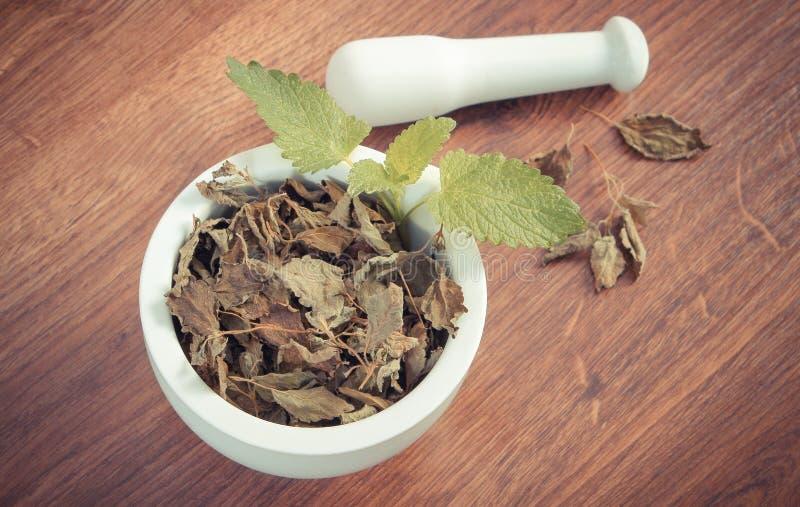 Tappningfoto, ny gräsplan och torkad citronbalsam med mortel, herbalism, alternativ medicin arkivbild