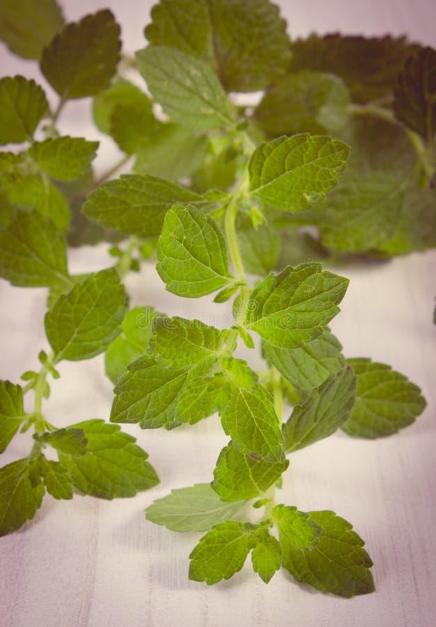 Tappningfoto, ny sund citronbalsam på den vita trätabellen, herbalism arkivbild