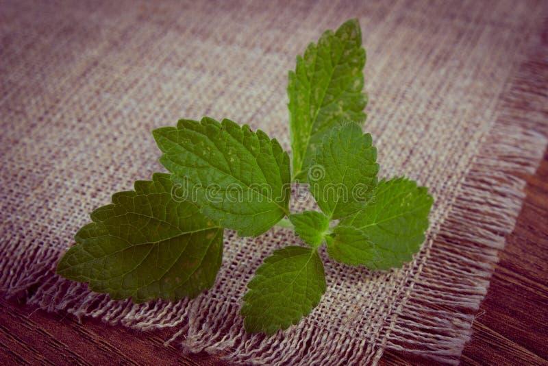 Tappningfoto, ny sund citronbalsam på trätabellen, herbalism arkivfoto