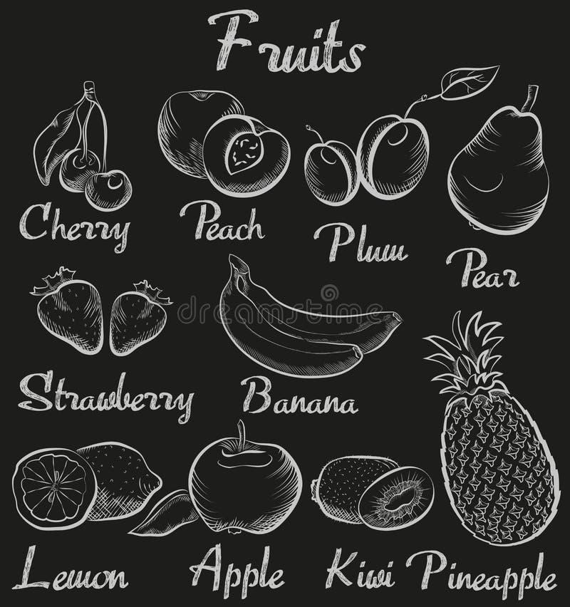 Tappningfrukter dendrog kritasvart tavla skissar den organiska fruktsamlingen vektor illustrationer