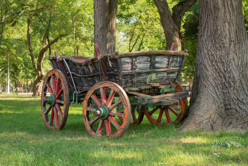 Tappninghästvagnen i en stad parkerar bland gamla träd och grön gräsmatta arkivbild