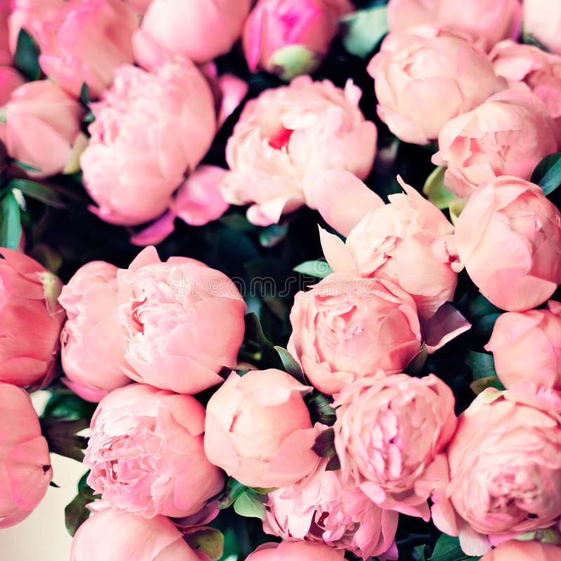 TappningParis rosor royaltyfria bilder