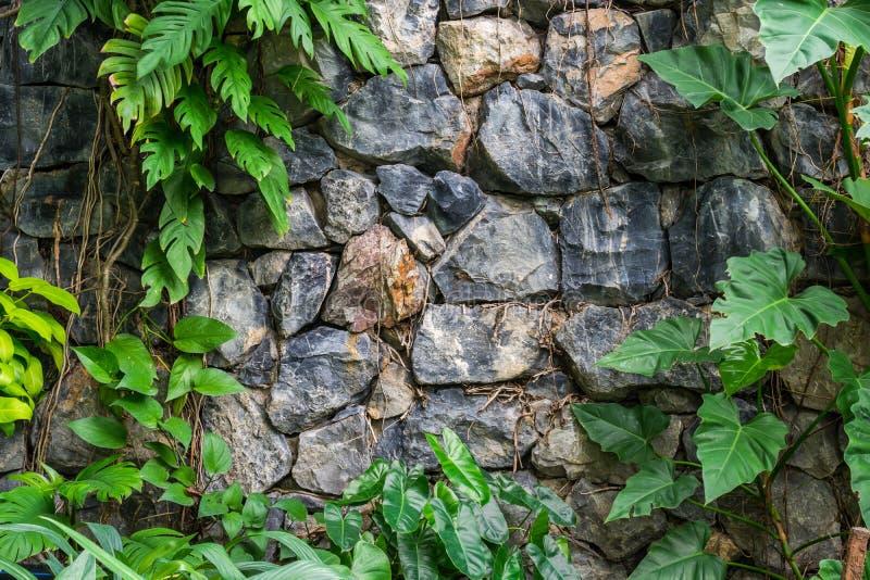 Tappningstenväggar i det botaniskt arkivfoton