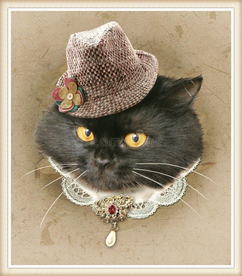 Tappningstilfoto av den klädda katten royaltyfri fotografi